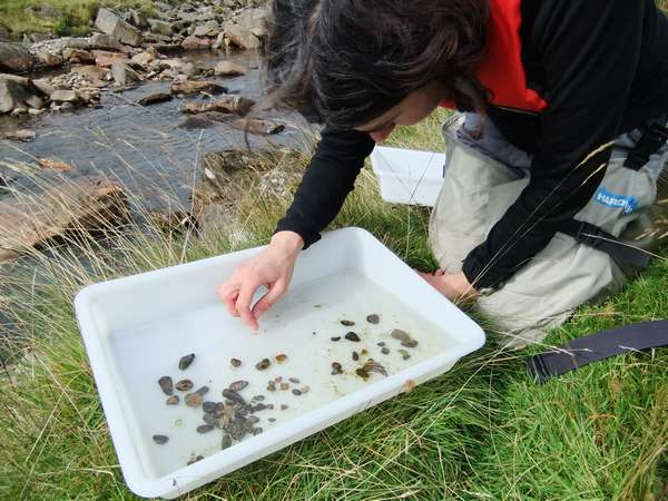 Freshwater macro-invertebrate survey